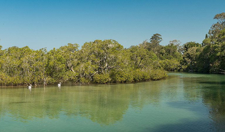 Tyagarah Nature Reserve - Tourism Gold Coast
