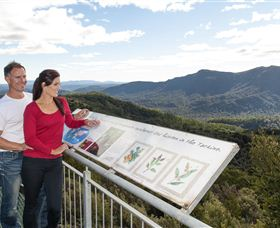Whyte Hills Lookout - Tourism Gold Coast