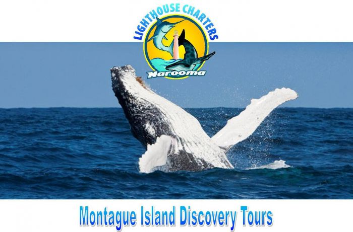 Lighthouse Charters Narooma - Tourism Gold Coast
