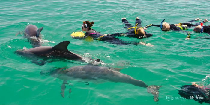Rockingham Wild Encounters - Swim with Wild Dolphins - Tourism Gold Coast