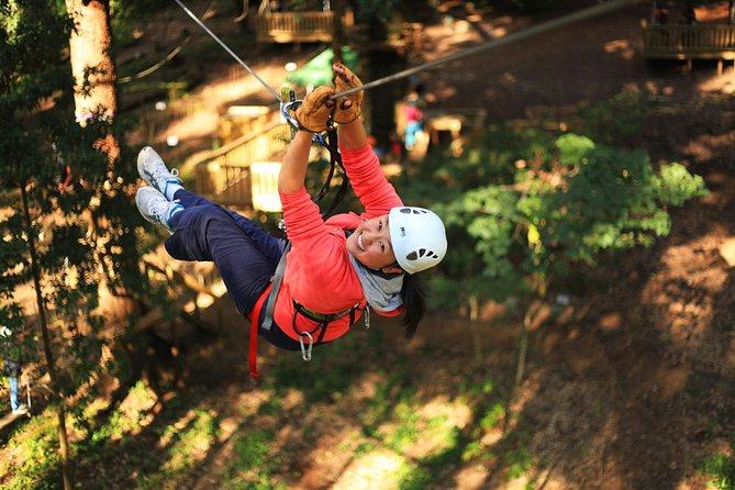 Trees Adventure Lane Poole Park - Treetop  Zipline Experience - Tourism Gold Coast
