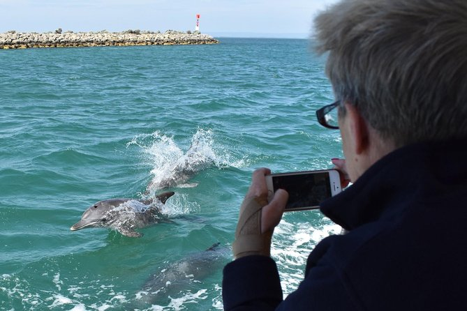 Mandurah Dolphin Island Adventure - Tourism Gold Coast