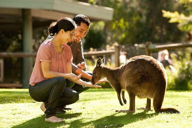 Very Best of Perth Tour - Wildlife Park  City Highlights Tour - Tourism Gold Coast