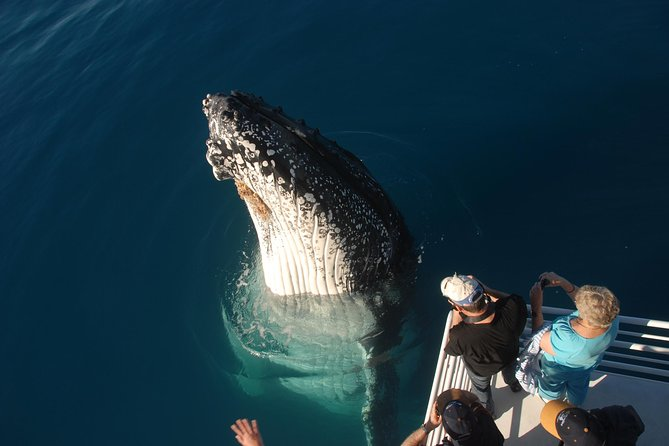 Whalesong Cruises - Hervey Bay Whale Watching experience