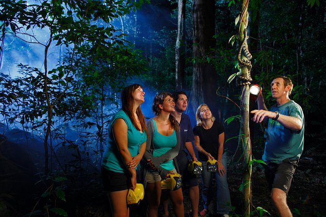 Daintree Rainforest Night Walk from Cape Tribulation - Tourism Gold Coast