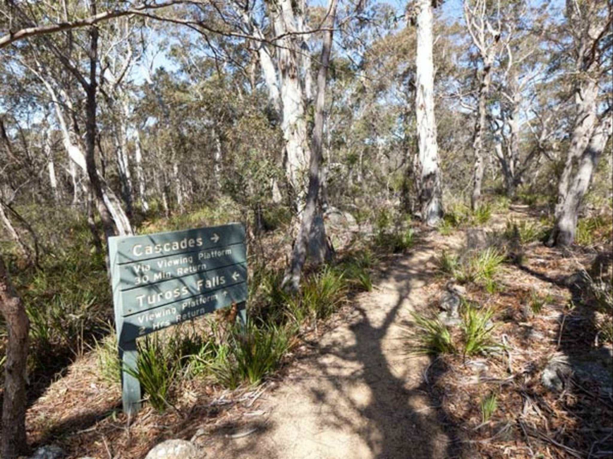 Cascades walking track and viewing platform - Tourism Gold Coast