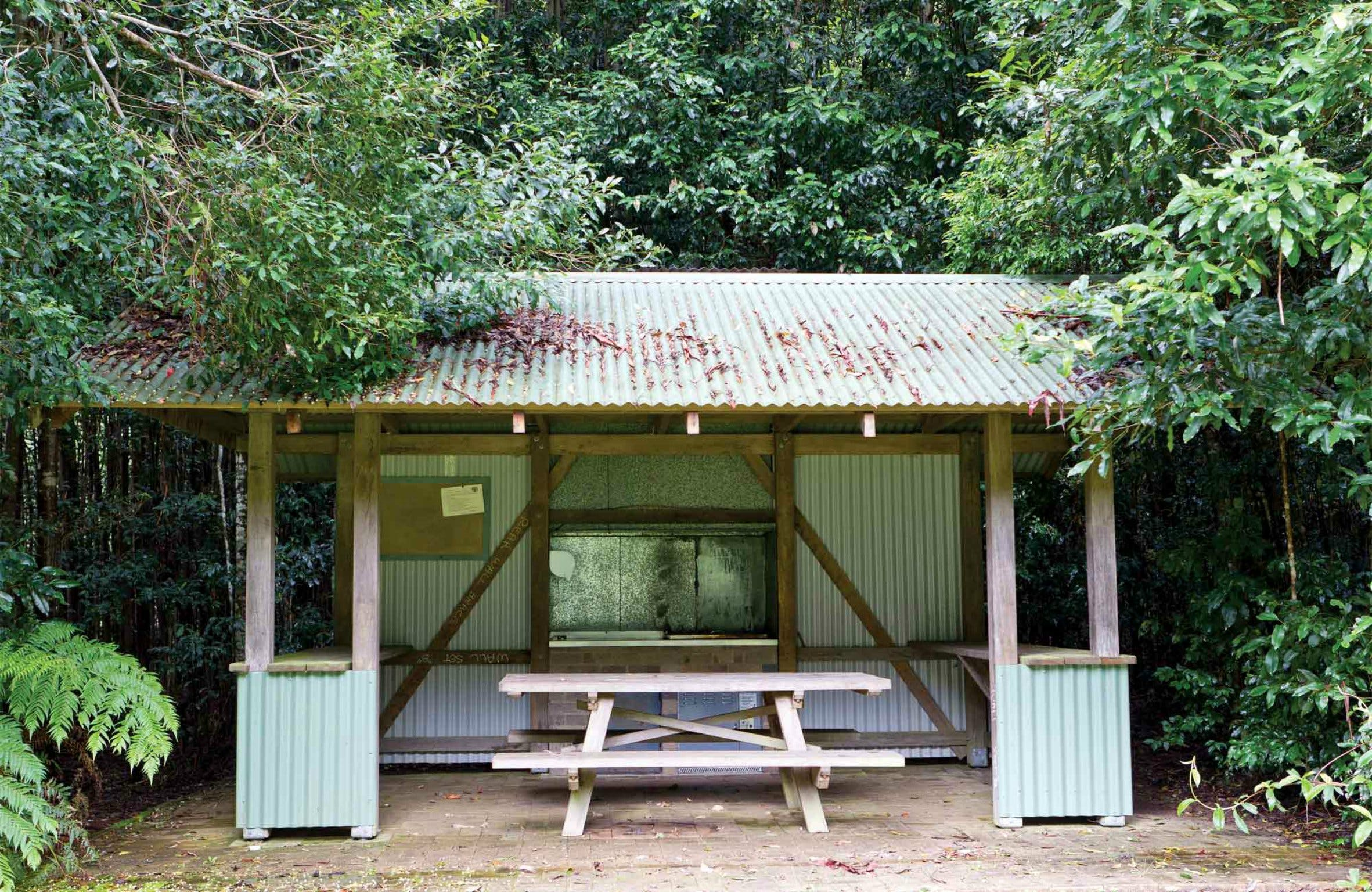 Coachwood Picnic Area - Tourism Gold Coast