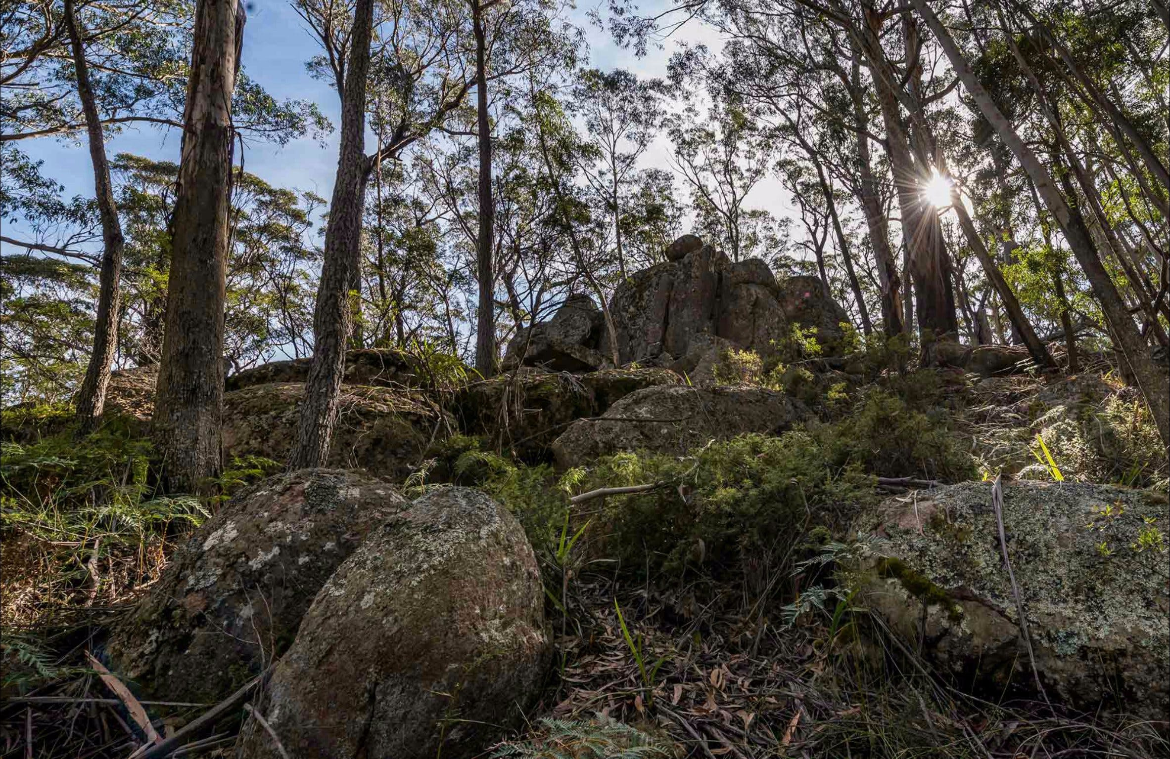 Pheasants Peak Walking Track - Tourism Gold Coast