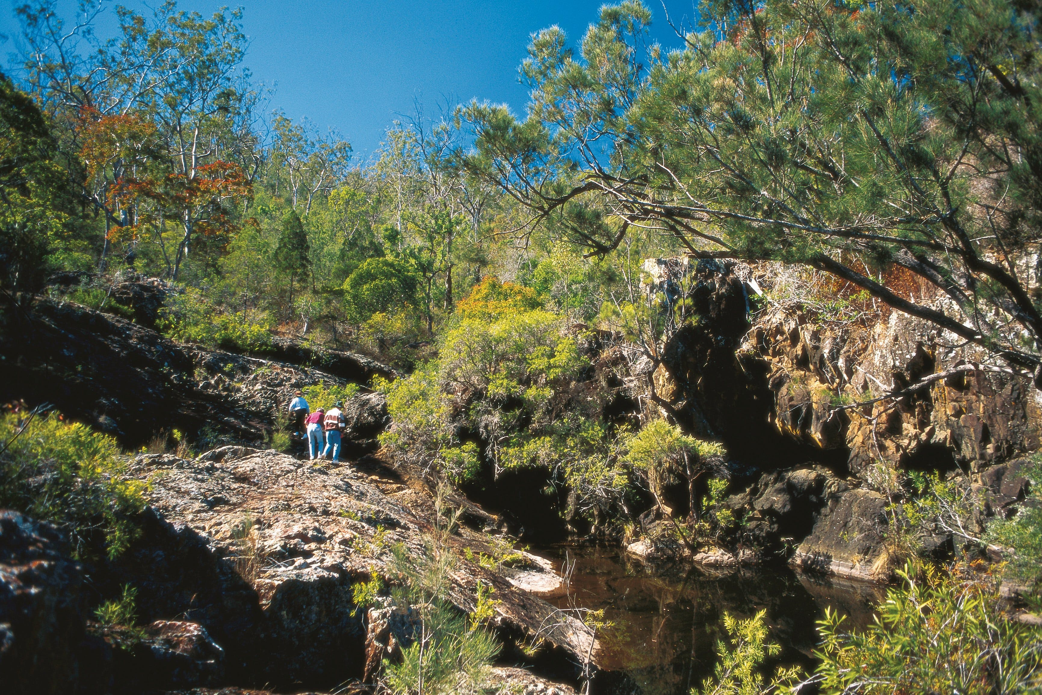 Kroombit Tops National Park - Tourism Gold Coast