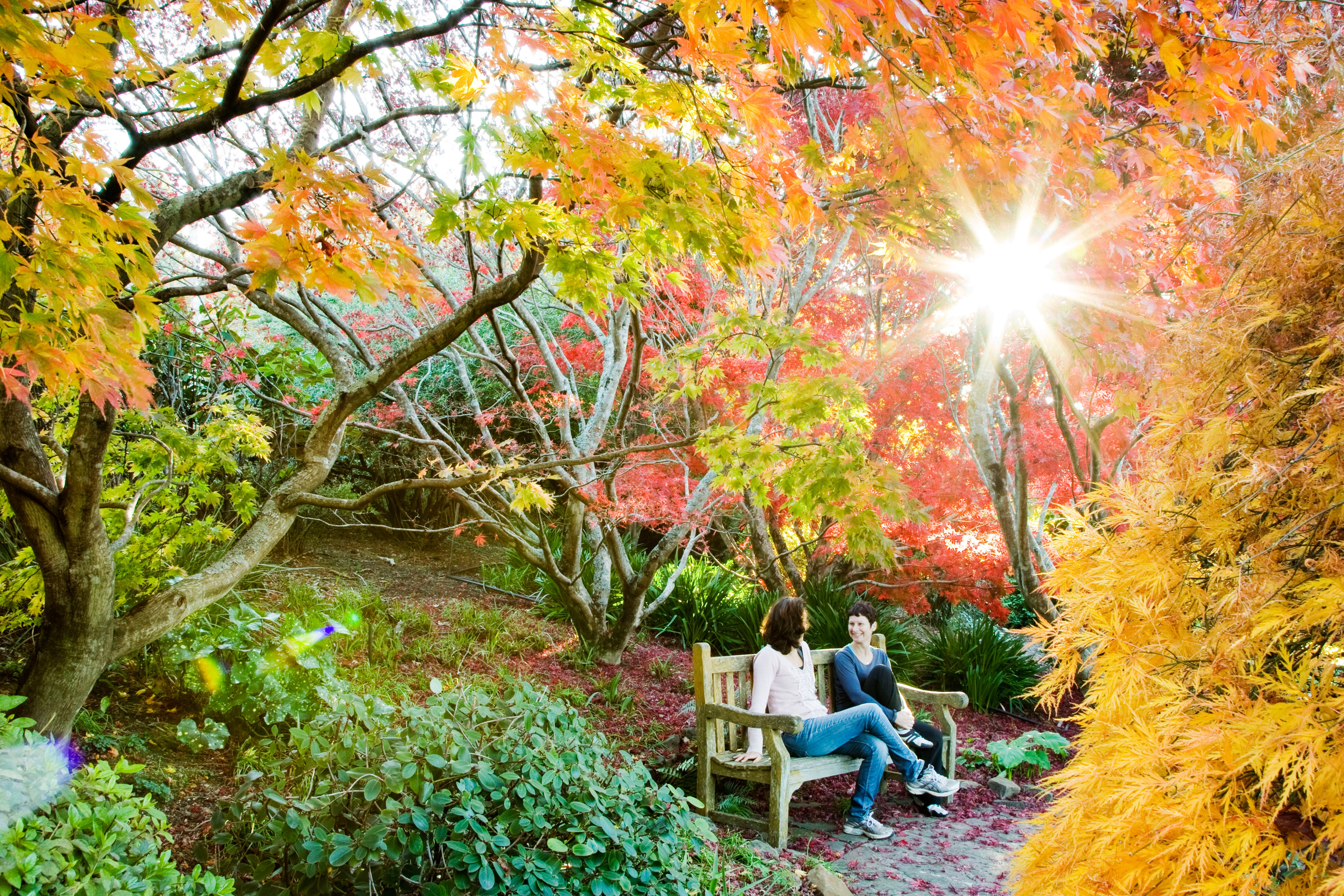 The Blue Mountains Botanic Garden Mount Tomah - Tourism Gold Coast