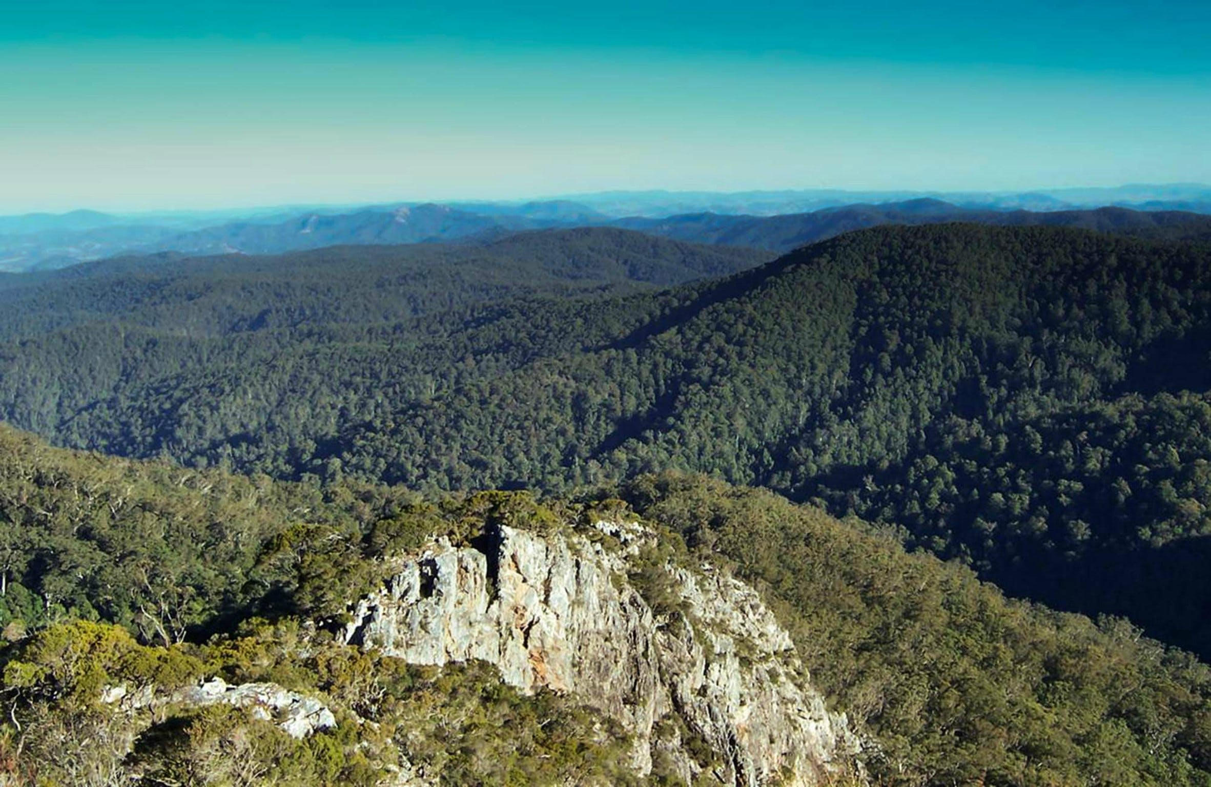Tapin Tops National Park - Tourism Gold Coast