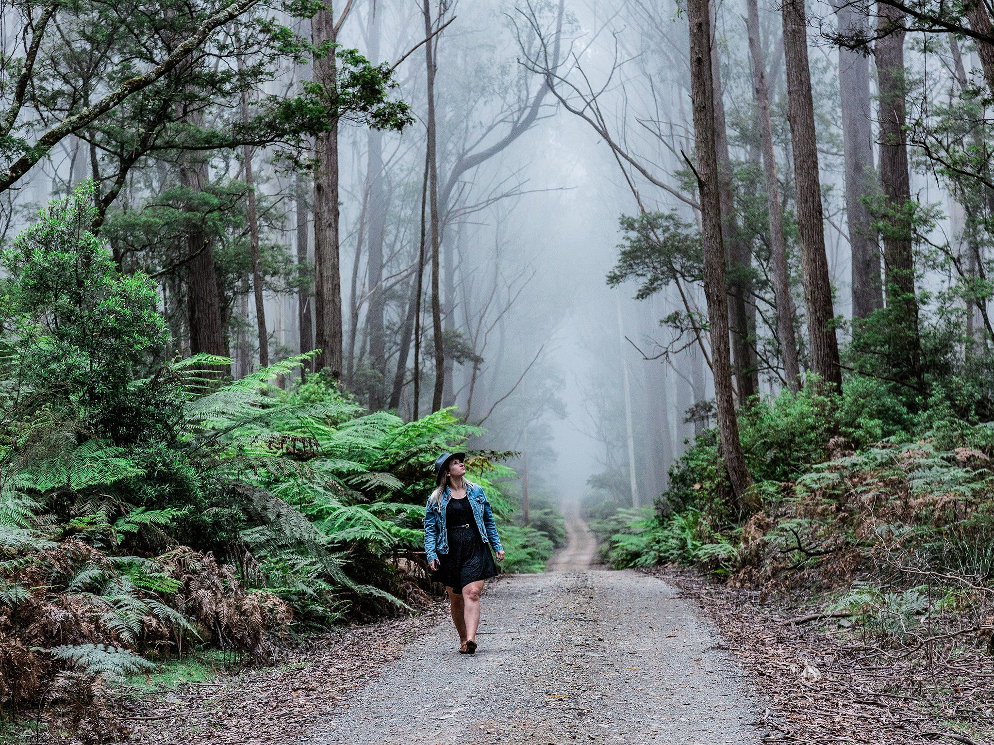 The Corn Trail Walking Track - Tourism Gold Coast