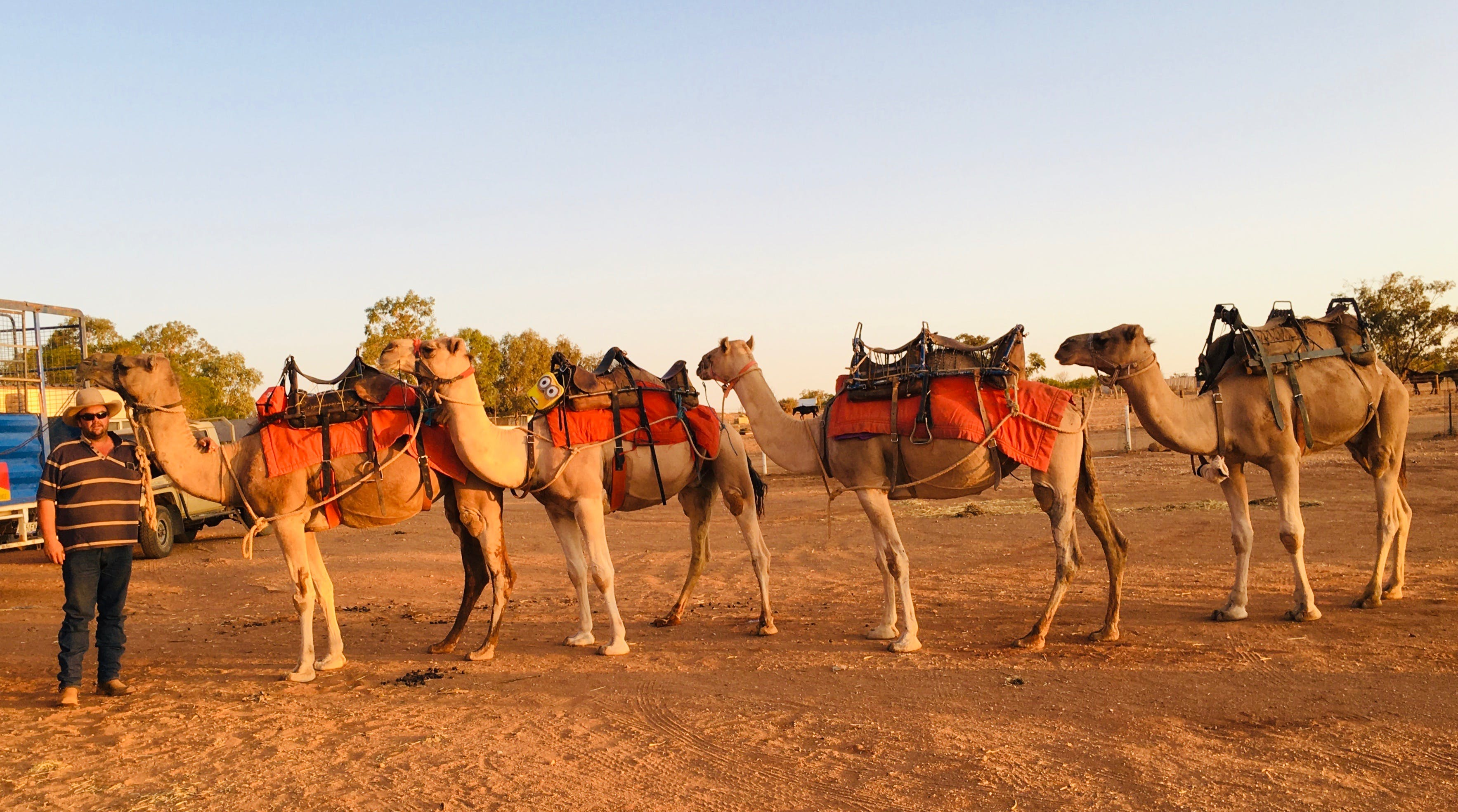 Broken Hill Camels - Tourism Gold Coast