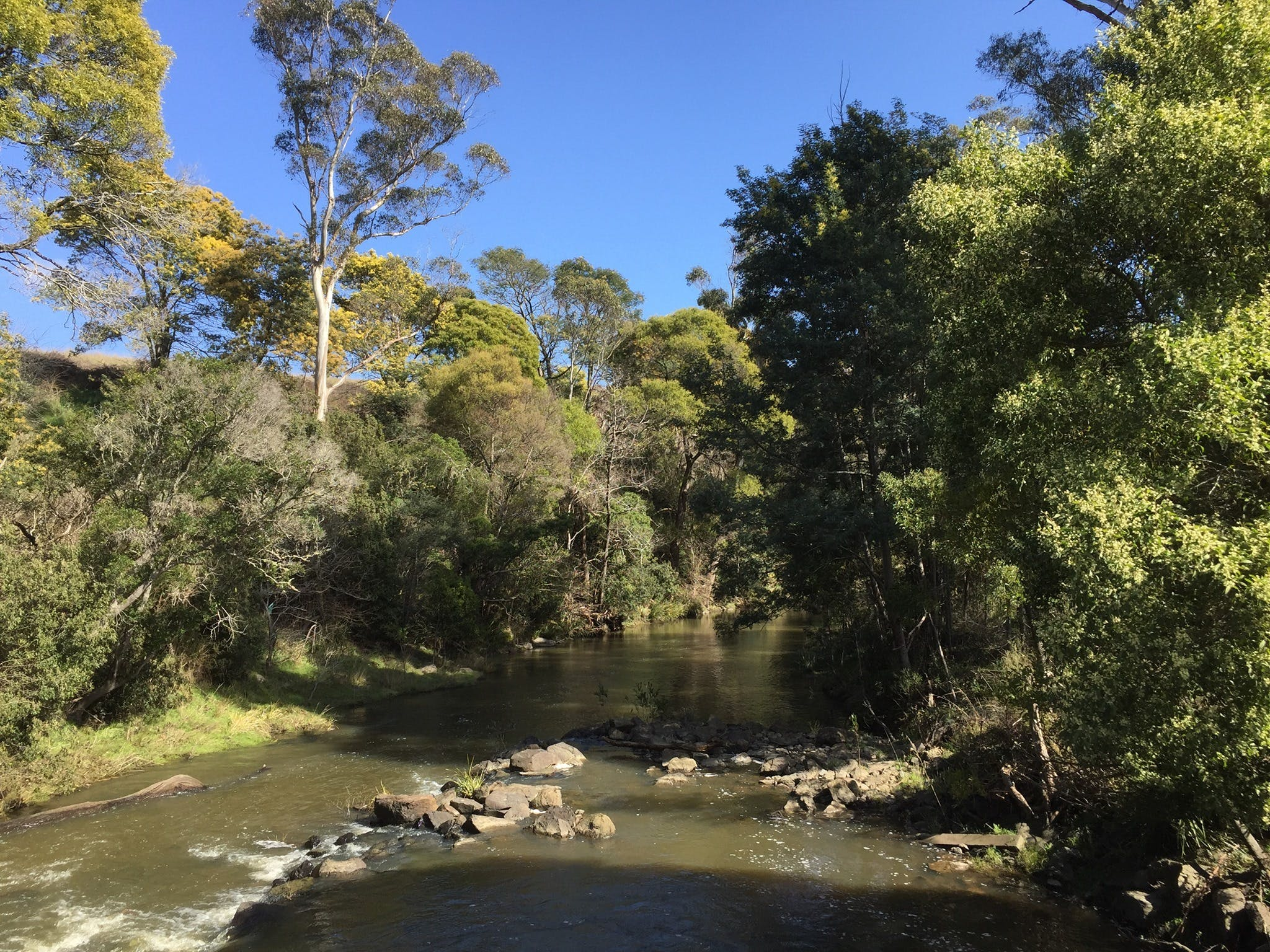 Pipers River Board Walk - Tourism Gold Coast