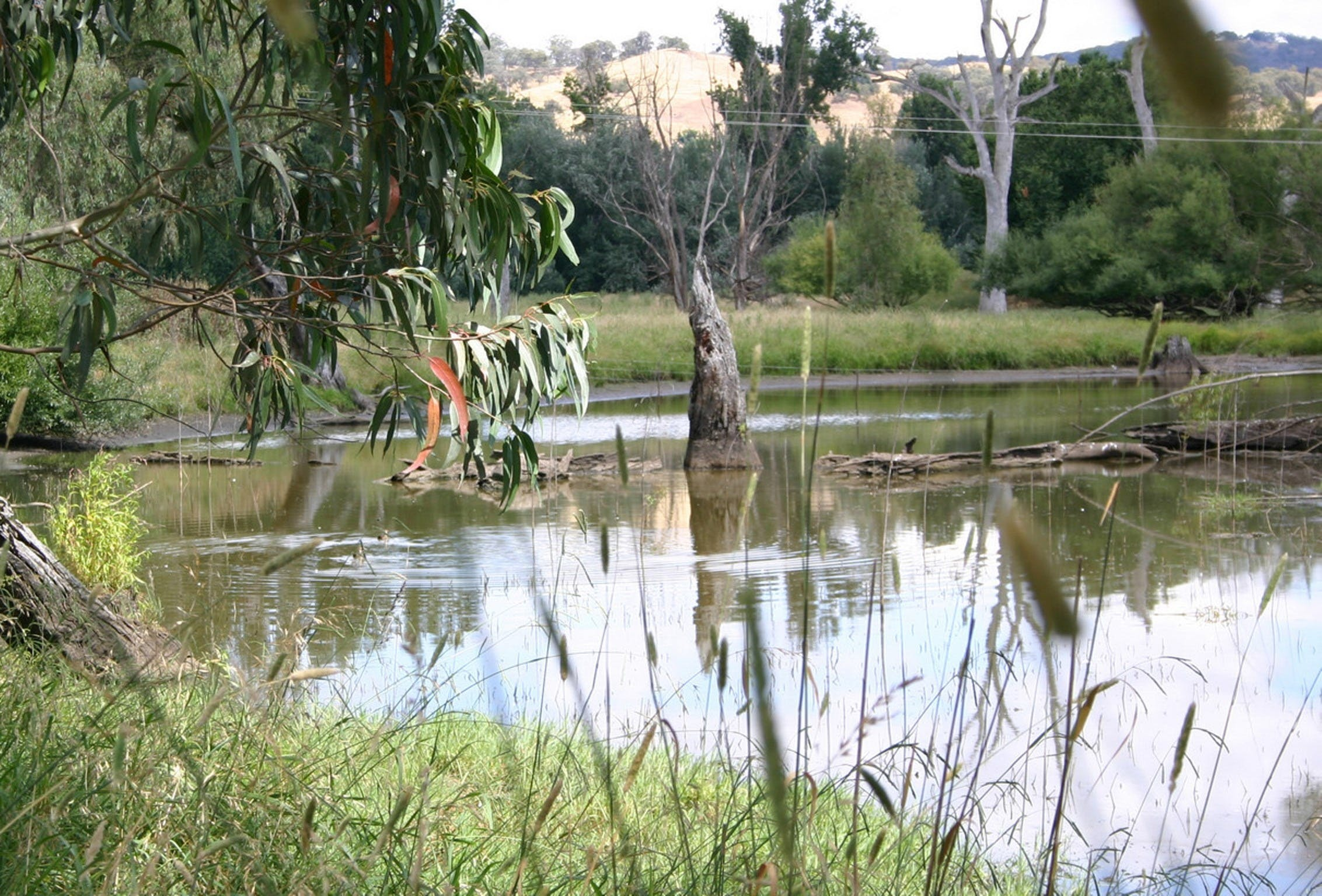Tumut Wetlands - Tourism Gold Coast