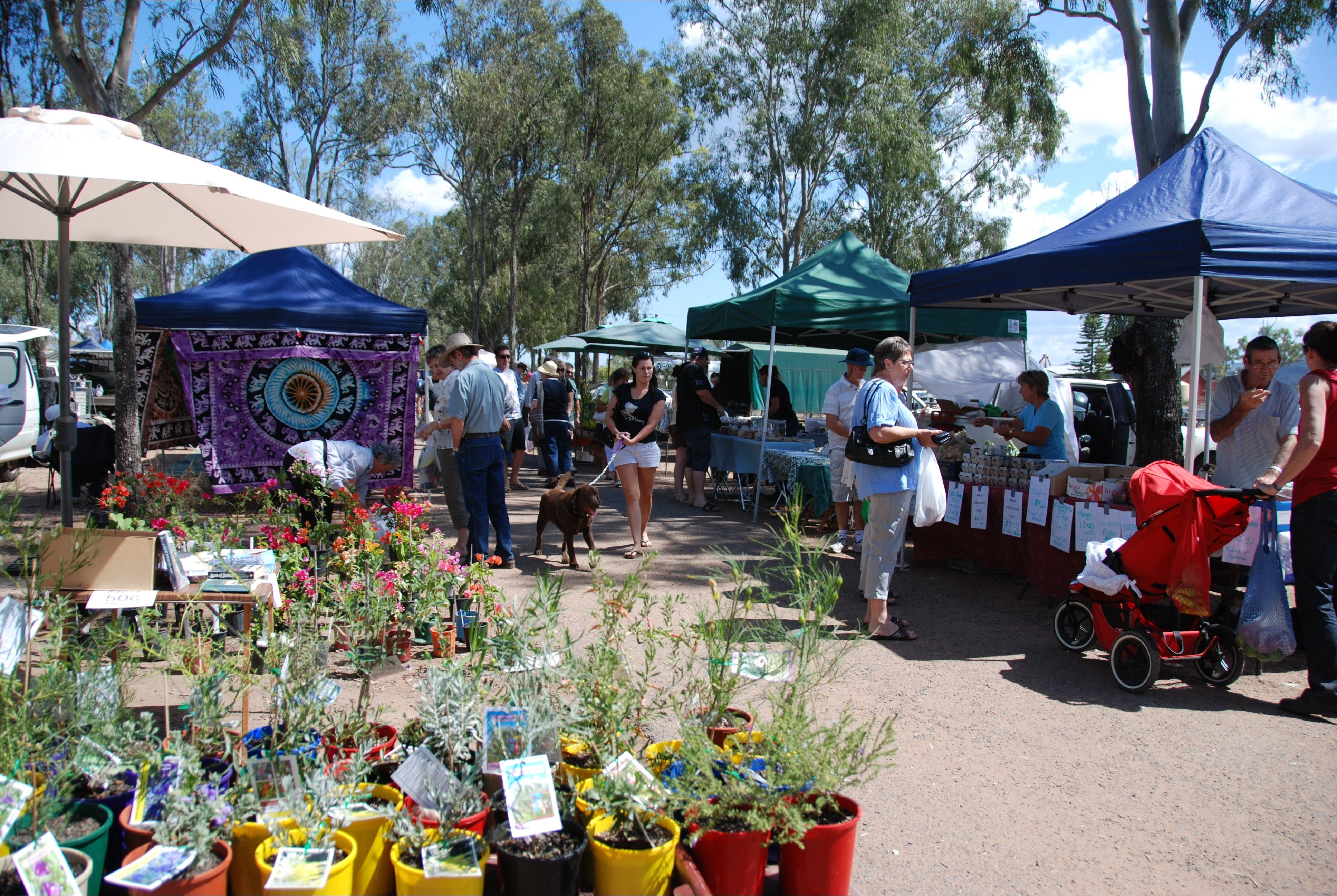 Fernvale Country Markets - Tourism Gold Coast