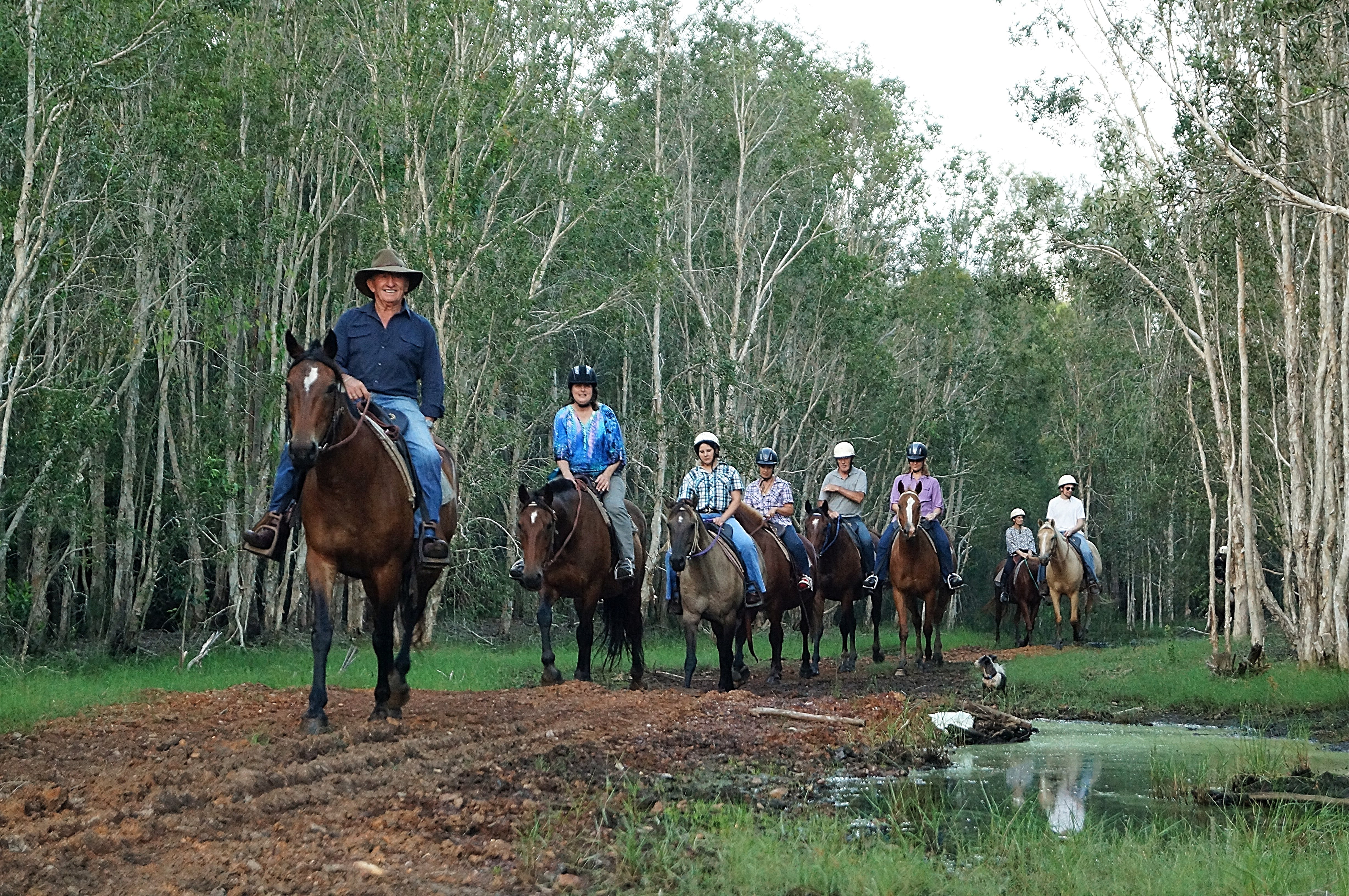 Night Horse Ride and Dinner - Tourism Gold Coast