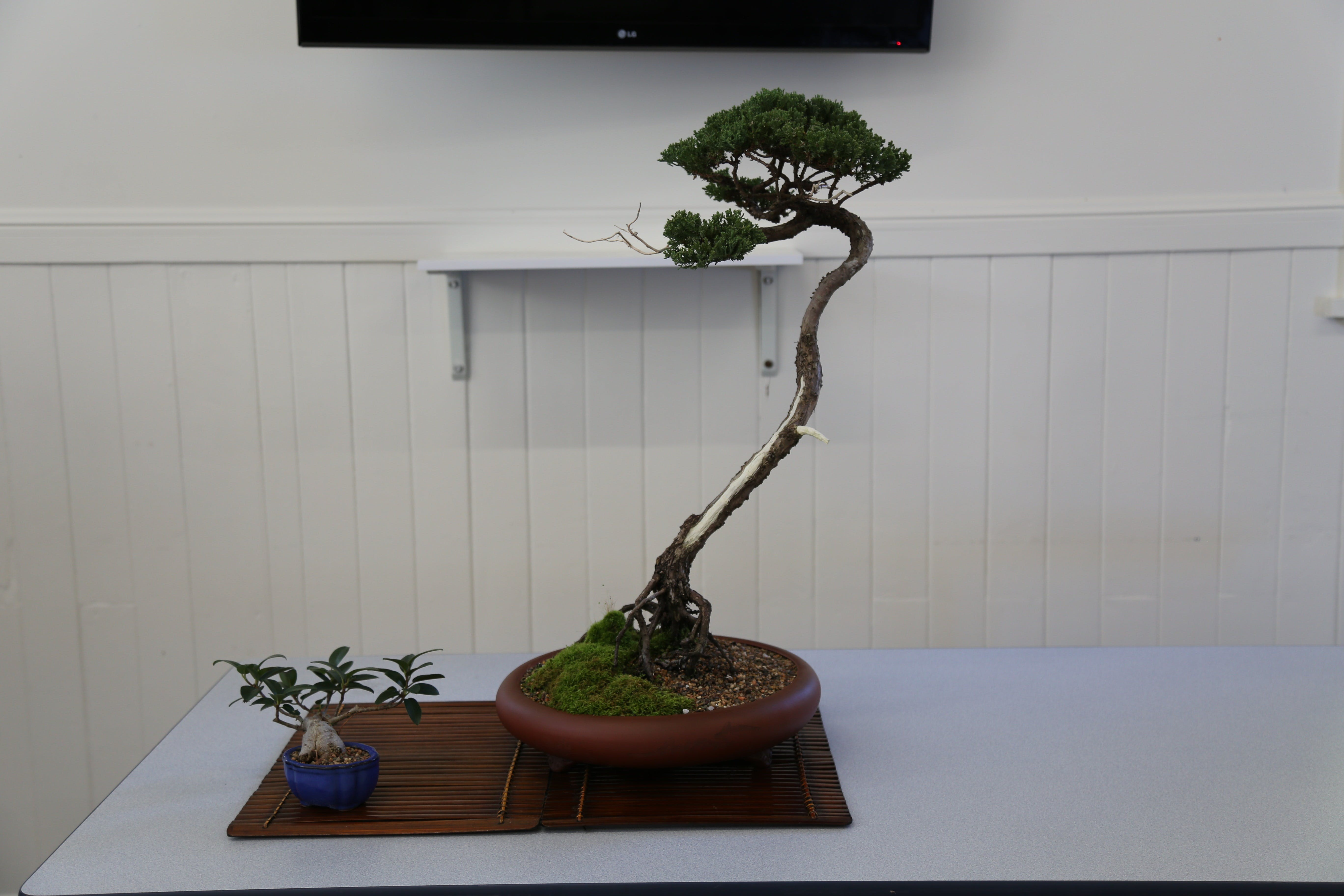 Wauchope Bonsai Workshop Group - Tourism Gold Coast