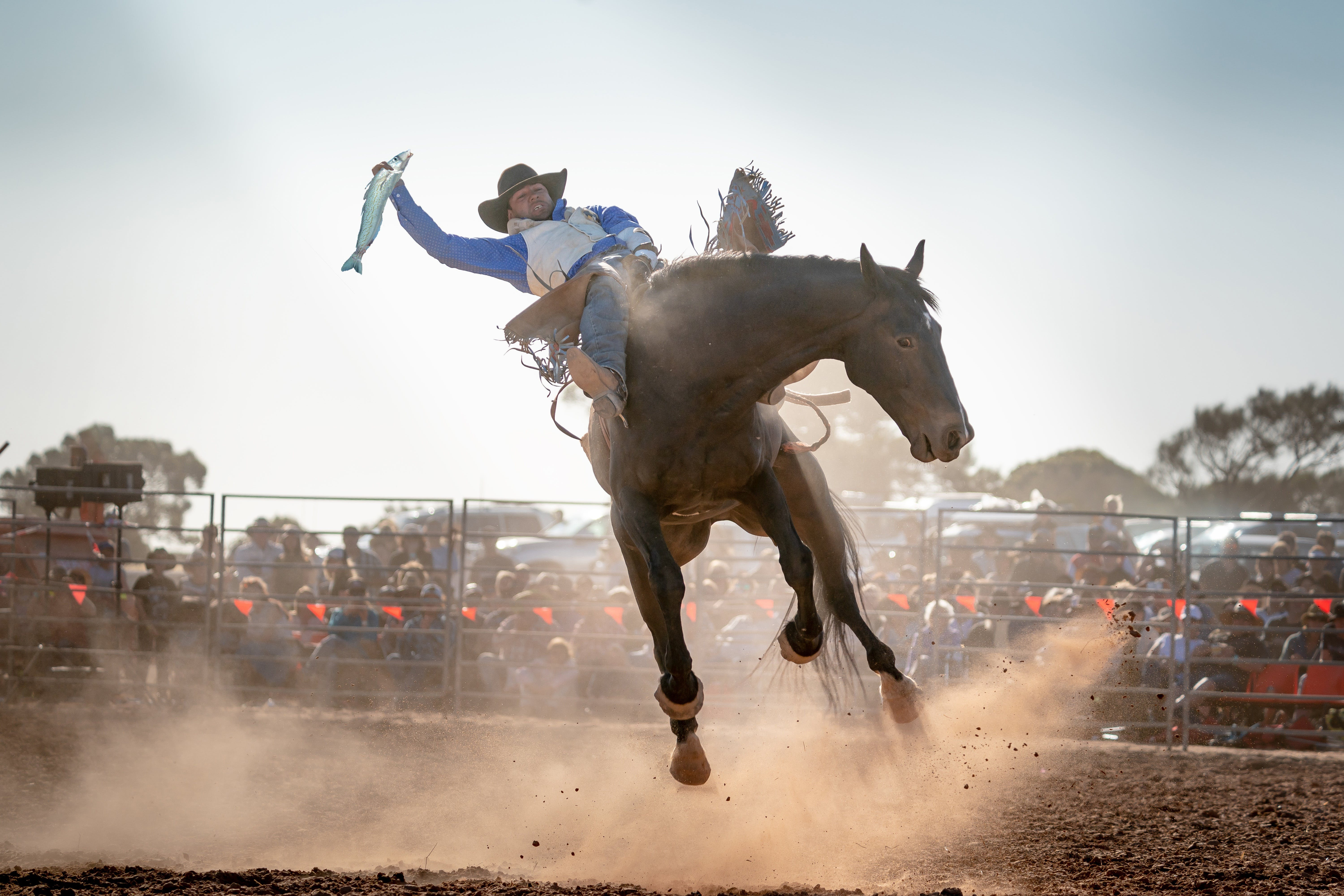 Rodeo by the Sea - Streaky Bay - Tourism Gold Coast