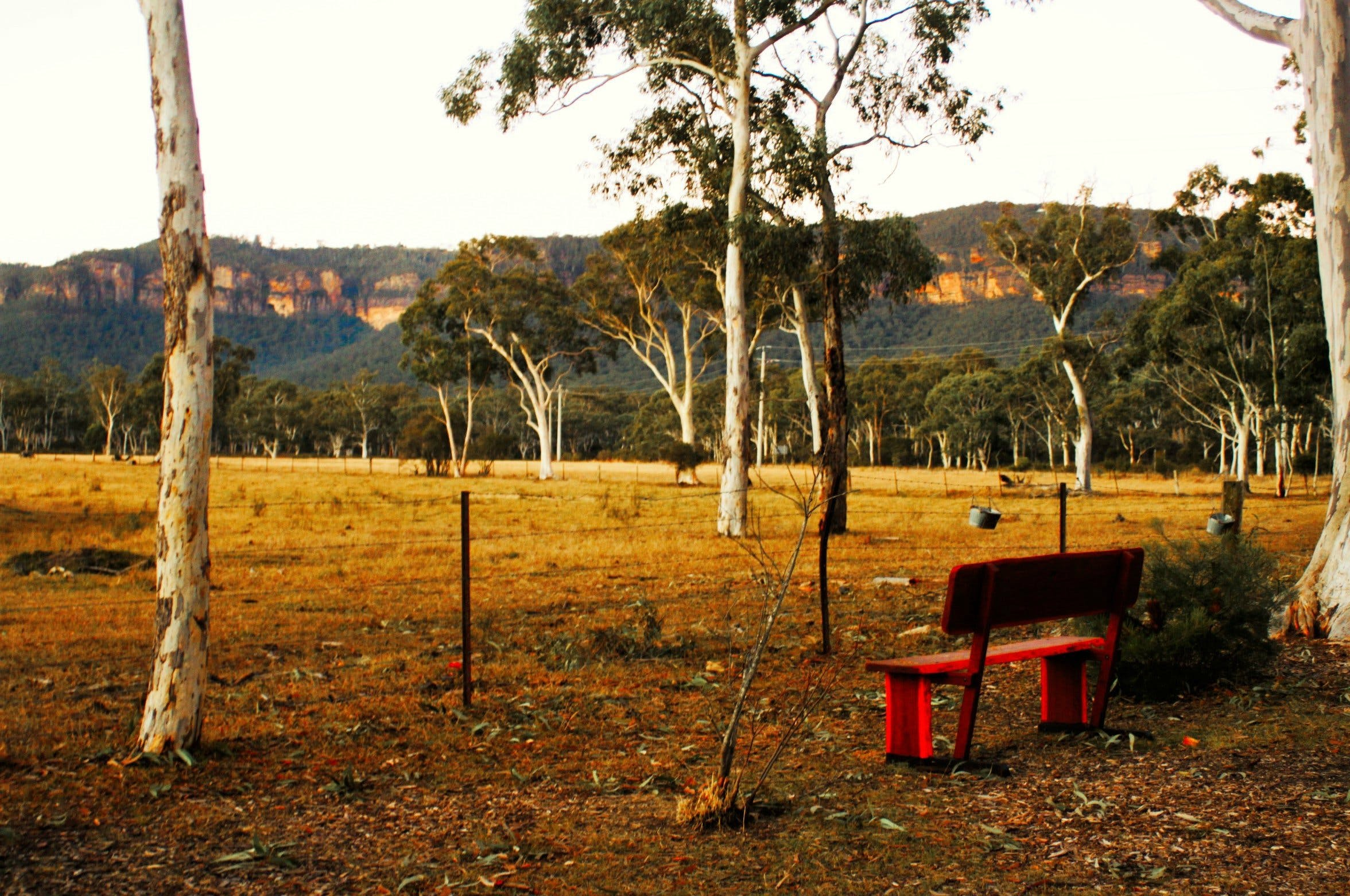 The Megalong Valley Tearooms - Tourism Gold Coast
