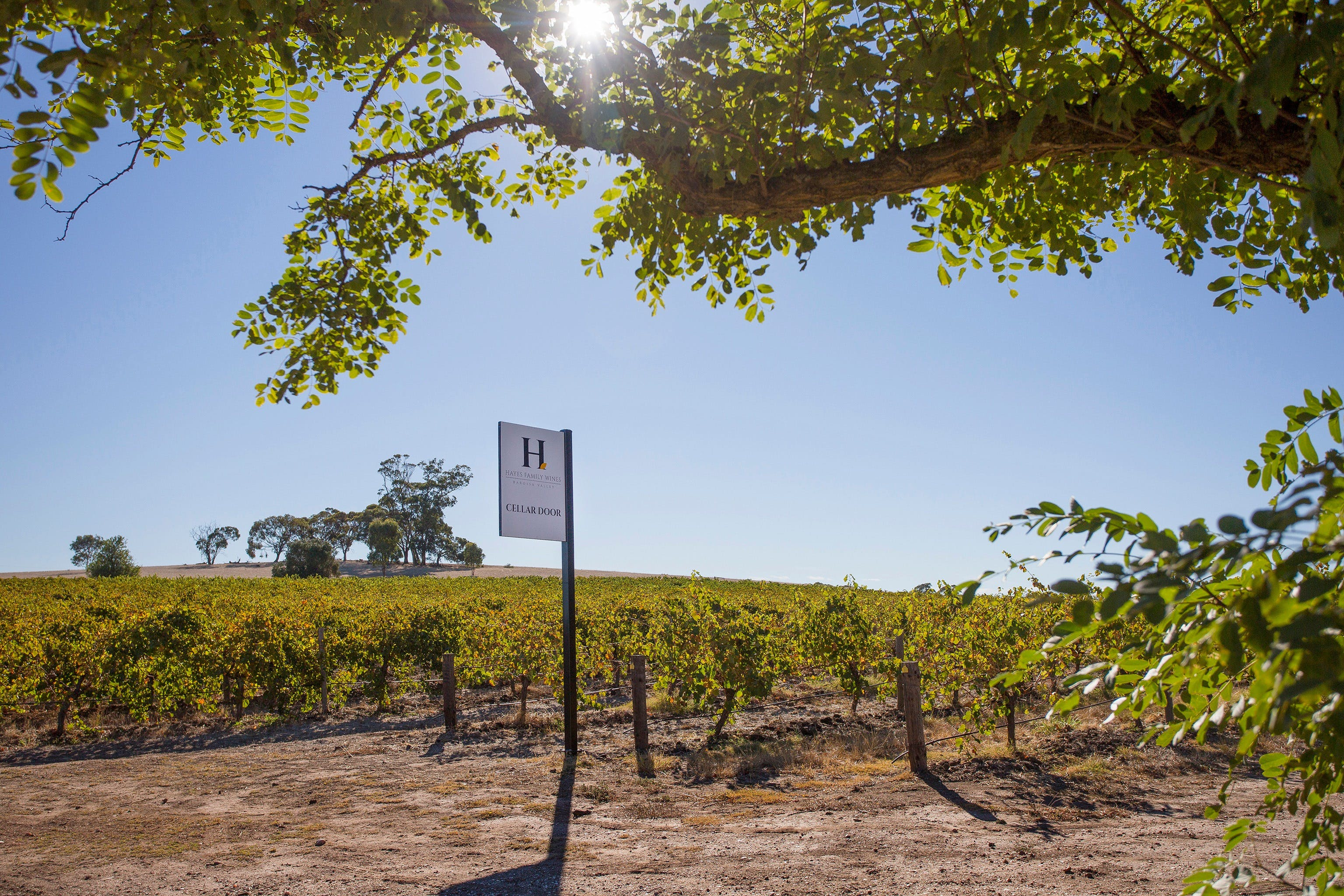 Hayes Family Wines - Tourism Gold Coast